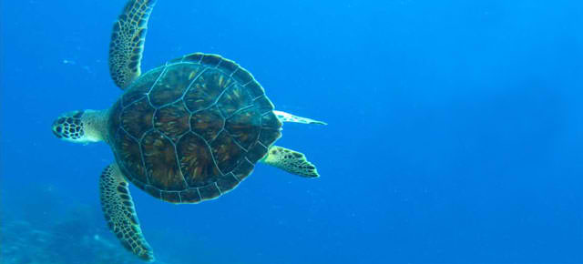 image of a sea turtle on a blue ocean background